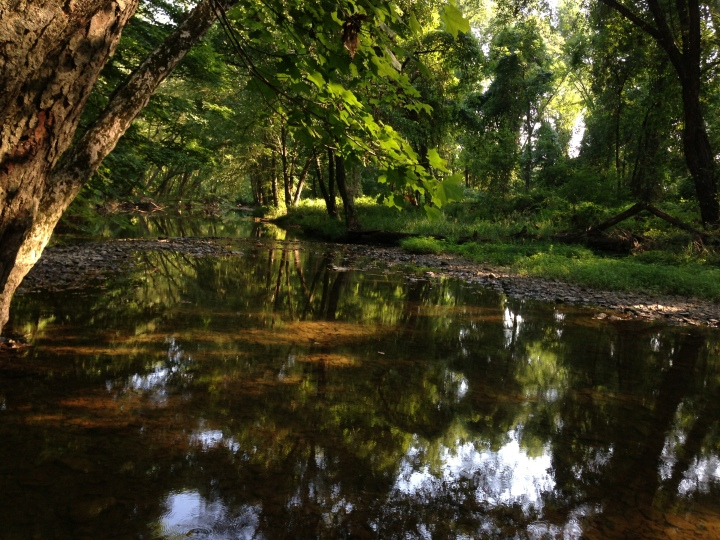 2014-08-27_16_56_52_View_down_the_Stony_Brook_from_the_Stony_Brook_Trail_in_the_Stony_Brook-Millstone_Watershed_Association,_New_Jersey