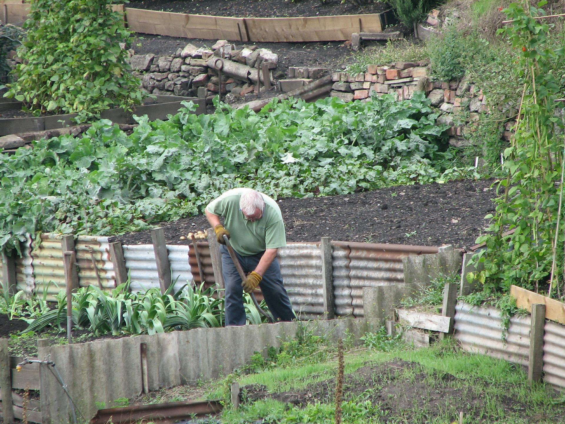 Allotment-2